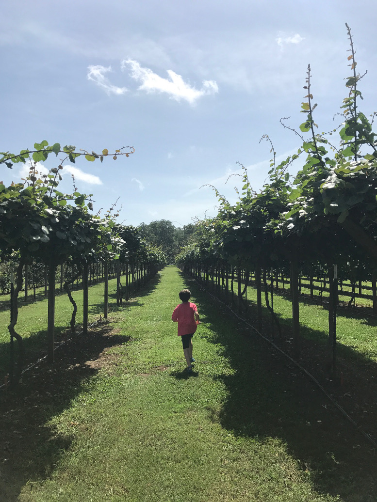 Top 10 Reasons You're Going To LOVE Lane Packing Southern Orchards