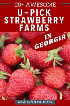 13+ Sensational Farms w/ the Juiciest Strawberry Picking in Georgia (2021)